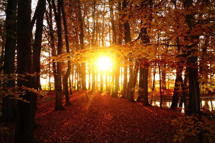 Een foto van vorige week, gemaakt vlakbij Voorst. De zon schijnt door het gebladerte van het bos en zette alles in een gouden herfstgloed.