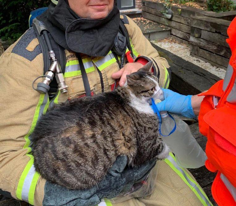 De kat kreeg zuurstof toegediend en werd overgebracht naar een dierenarts.