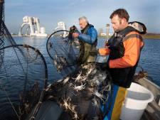 Laatste paling voor dit jaar wordt langs de stuw bij Maurik geholpen