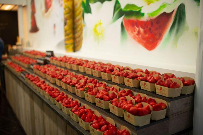 Iedere dag verse aardbeien uit Hoogstraten.