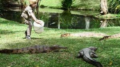 Kiekje met krokodil: Robert Irwin (15) lijkt sprekend op zijn vader Steve