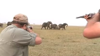 VIDEO. Jagers schieten olifant dood en daarop keert hele kudde zich tegen hen