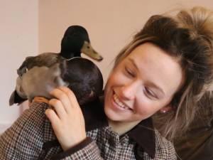 Elle sauve un canard pendant une tempête, il ne veut plus la quitter