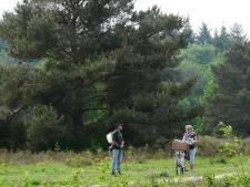 Gemeente Ermelo geeft toe: gifspuiten op de hei was illegaal