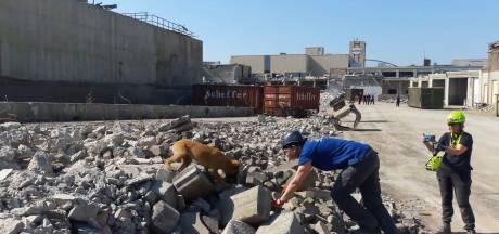 Half gesloopte slachterij Hilckmann perfect 'aardbevingsgebied' voor honden
