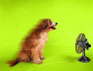 Warme zomerdag kan shock bij huisdieren veroorzaken