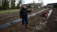 Oud Beersel plant kriekengaard aan op Laarheide