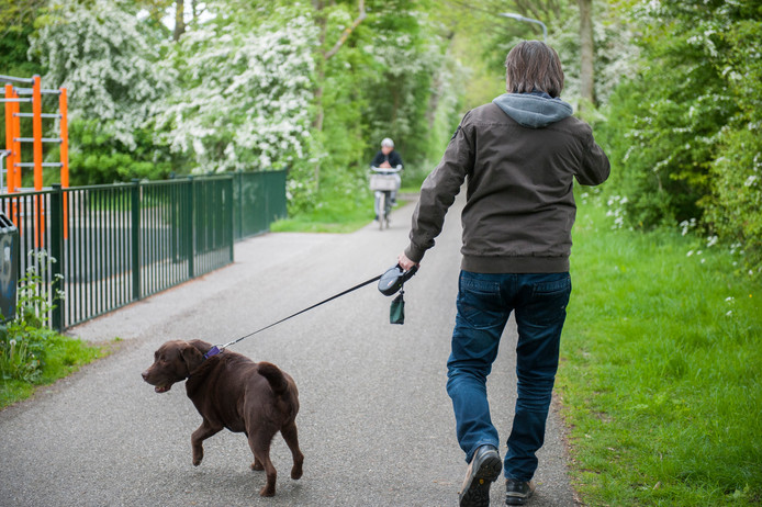 Hond uitlaten op het Meiveld in Middelburg (archief).