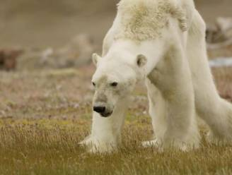 """Noordpool te warm om nog arctisch genoemd te worden: """"Snelheid van veranderingen is opmerkelijk"""""""