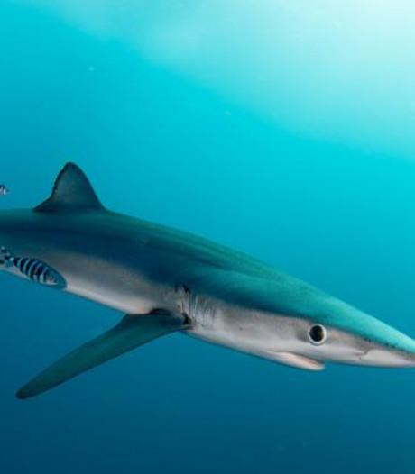 Un requin aperçu sur une plage des Landes