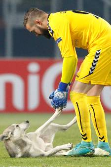 Hond verstoort duel tussen Vardar en Rosenborg