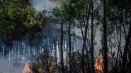 Ongeveer 500 personen geëvacueerd vanwege bosbrand Zuid-Frankrijk