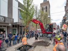 Eerste bomen in vernieuwde Grotestraat in Ede