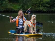 Zomerse waterpret voor hulphonden en baasjes op surfplanken in Oldenzaal
