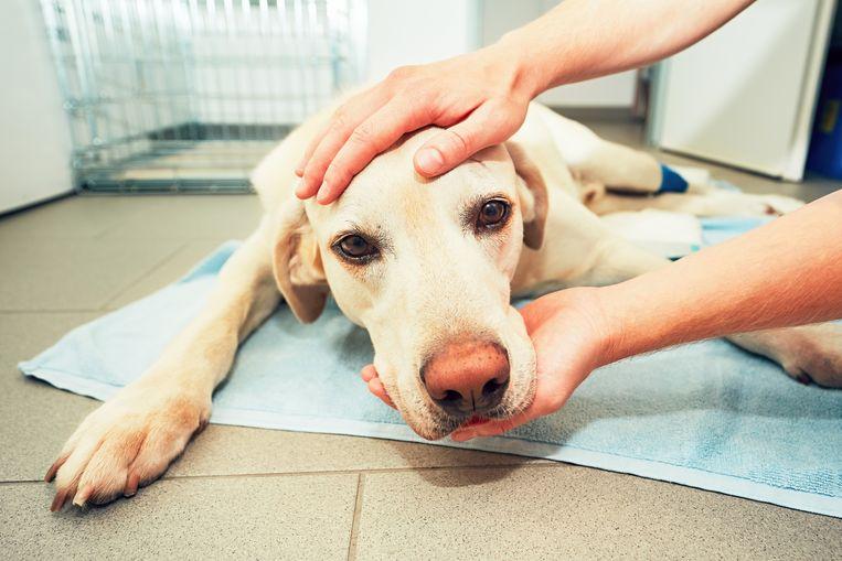 Ontstekingsremmers zijn giftig voor honden en katten.