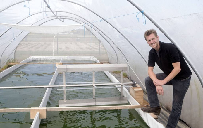 Hendrik Staarink in de kas waar Algreen algen teelt. Foto: Herman Stöver