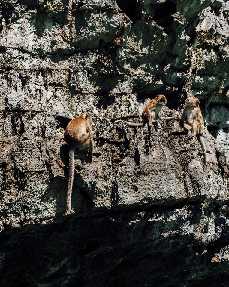 Kleine aapjes die op een eiland wonen. Toeristen proberen selfies te nemen met de eigenzinnige aapjes. Beeld Rebecca Fertinel