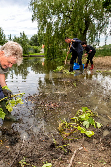 Meer ruimte voor flora en fauna in Maassluis: proef met andere wijze van zaaien en maaien