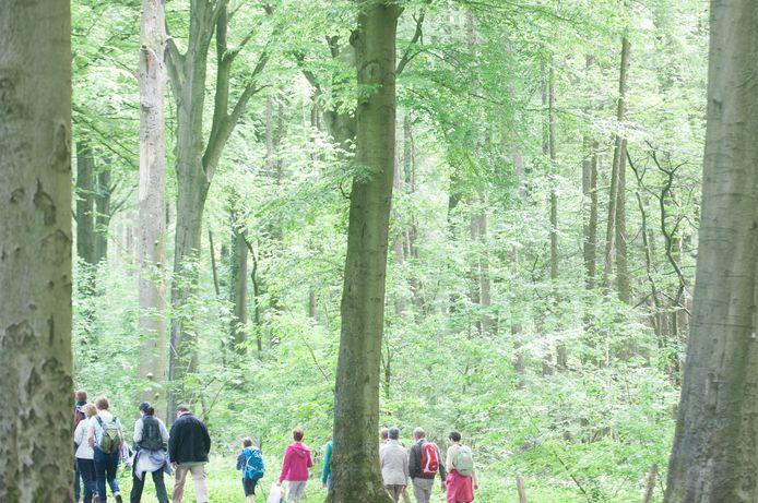 Het Kluisbos in Kluisbergen, een paradijs voor wandelaars, maar ook een twistgebied als het gaat over de jacht.