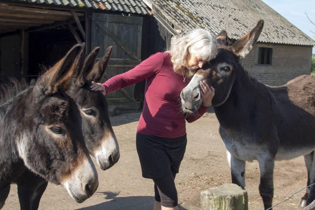 """Annerieke de Jonge met drie van haar ezels. """"Als je één ezel aandacht geeft, vragen ze er allemaal om"""", zegt ze vertederd. De ezelopvang moet verhuizen voor 1 januari 2017. foto Erna Lammers"""