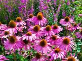 Met deze planten is je tuin het hele jaar mooi