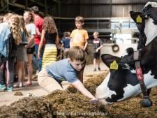 Ervaar boerenleven in Salland: biggen knuffelen en yoga tussen geiten