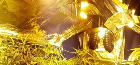 Politie vindt hennepkwekerij met 94 planten in Doesburg