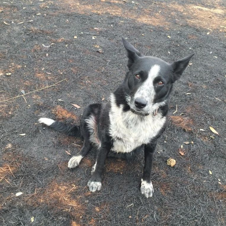 Hond Patsy na haar moedige actie