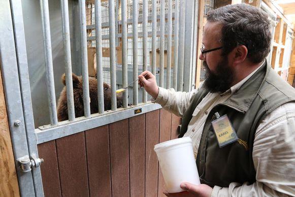 Verantwoordelijke Karel Ackaert voedert een van de beren in De Zonnegloed.