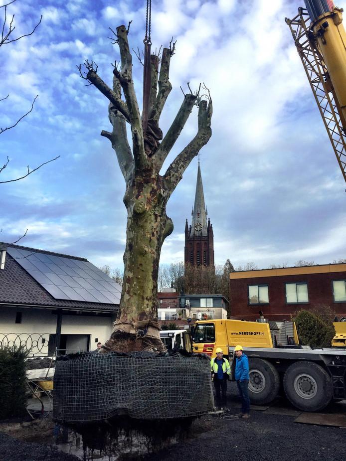 De boom werd met een hoogwerker op de juiste plek gezet.