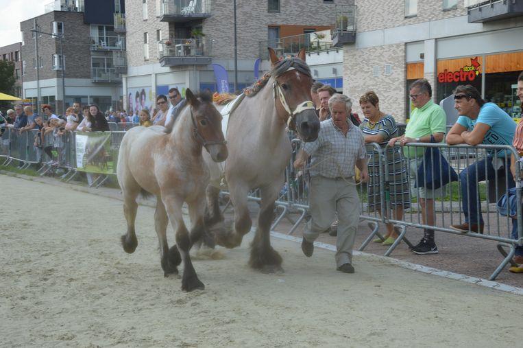 Ook de jaarlijkse paardenmarkt ontbrak niet op deze jaarmarkt.