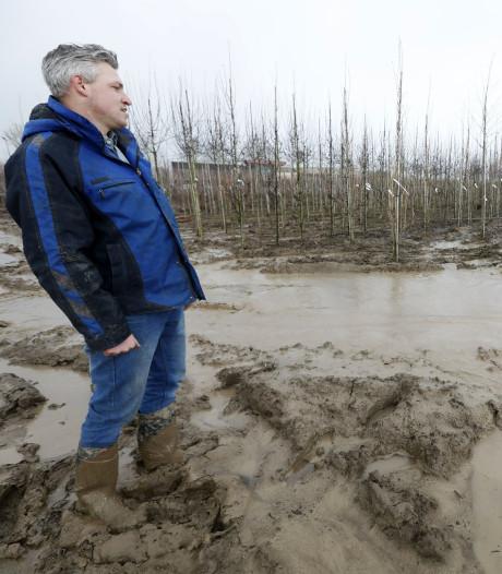 Help! De boer verzuipt: 'We krijgen de bomen bijna niet van het veld'