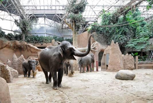 De olifanten moesten wennen aan de nieuwe vloer.