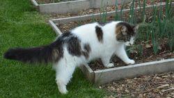 Van koffiegruis tot cacaodoppen: zo houd je katten weg uit je tuin