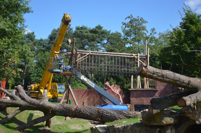 Op woensdag 24 augustus opent Safaripark Beekse Bergen een nieuw verblijf voor haar drie lippenberen. Het verblijf wordt nu verbouwd.