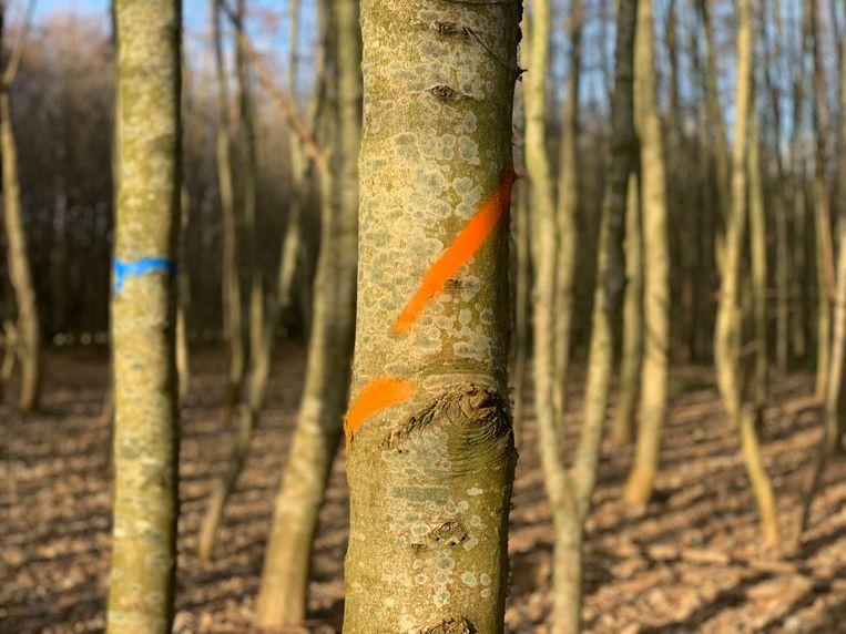 Selectieve boomkap in Lintbos Grimbergen