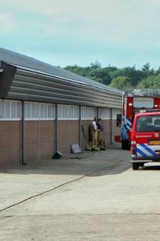 6 varkens overleden na vastzitten in gierput in Deurne
