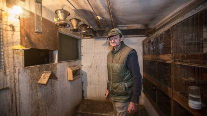 Voor duizenden euro's vinken gestolen in Teralfene