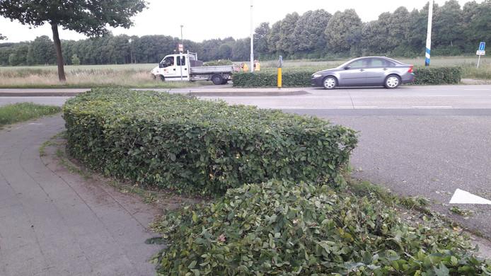 Aan beide zijden van de Akkerweg (T31) heeft de buitendienst van de gemeente Oisterwijk de beukenhagen kort geknipt.
