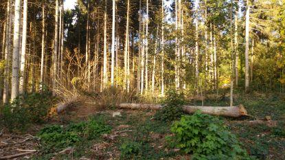 Uitdunning van bos Horensberg start op 4 november