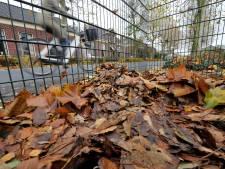 Bladkorven West Betuwe worden volgend jaar beter verdeeld