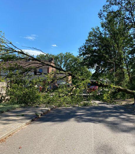 Metershoge boom valt spontaan om en scheert rakelings langs woonhuis in Gorssel
