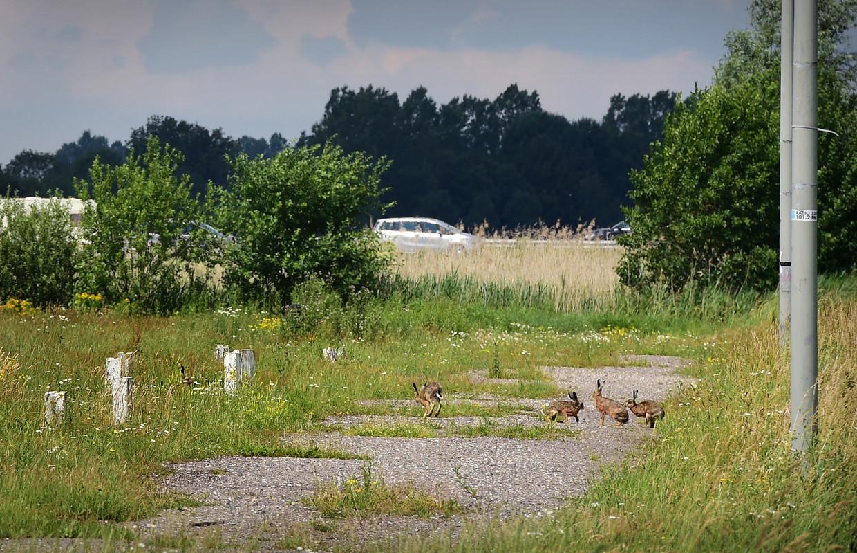 Het voormalige evenemententerrein van industriedorp Veghel, waar de 'Polenwijk' is gepland.