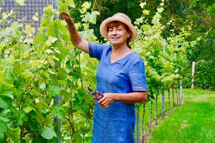 Sigrid van Ede in de wijngaard van landgoed Hoog Beek & Royen. Sinds deze week beginnen de druiven er kleur te krijgen.