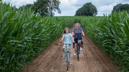 Deze zomer kan je ook fietsen door de mais aan De Merelhoeve