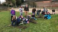 Kinderen De Wijsneus planten boompjes in hun buitenzinnige tuin