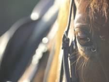 Waarom een paardenfokker uit Witharen met de buurman in clinch ligt over uitbreidingsplannen