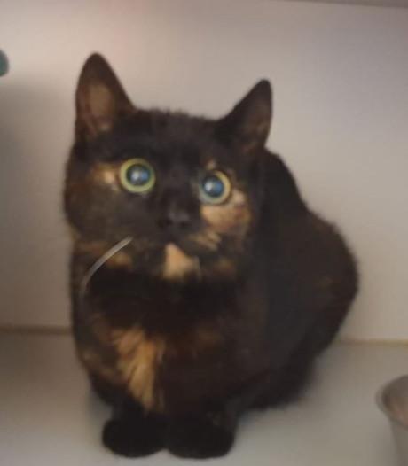 Kittens ontsnappen op nippertje aan gruweldood in sloopauto