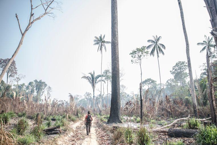 Aripa op het stuk ontbost land aan de grens van hun grondgebied (wel nog hun grondgebied) Hij heeft een geweer bij zich in het geval dat de ontbossers terug komen. Aripã Karipuna, van de Karipuna-indianen in de Amazone, toont een stuk ontbost land aan de grens van het grondgebied van zijn stam. Hij heeft een geweer bij zich voor het geval de ontbossers terugkomen. Beeld Marlena Waldthausen