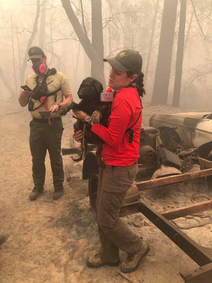 Puppy Trooper werd gevonden in de resten van de bosbranden van Californië.
